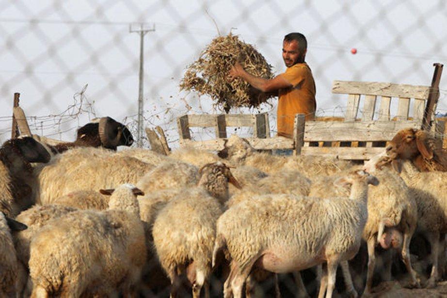 Dans leurs habitations de fortune, aux murs de... (PHOTO AFP)