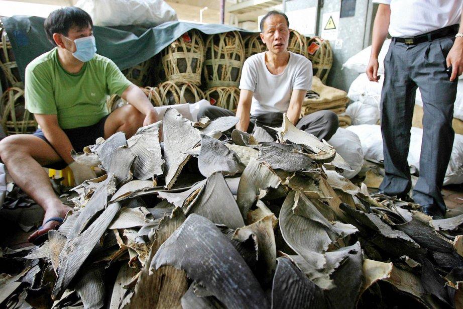 Cette tradition culinaire chinoise a entraîné une surpêche... (PHOTO ANDREW ROSS, ARCHIVES AFP)