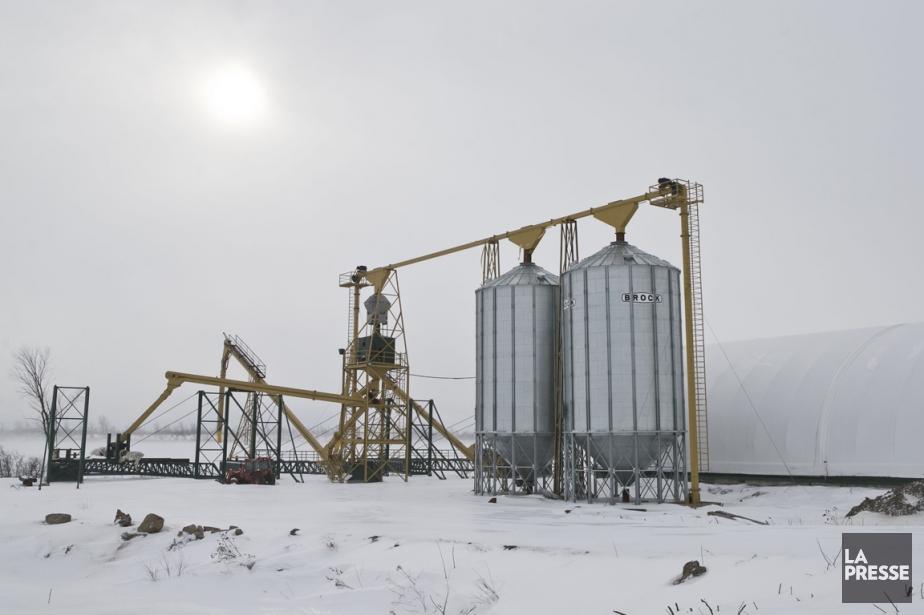 À Salaberry-de-Valleyfield, l'entreprise Grains Lac Supérieur possède, sur... (PHOTO HUGO-SÉBASTIEN AUBERT, LA PRESSE)