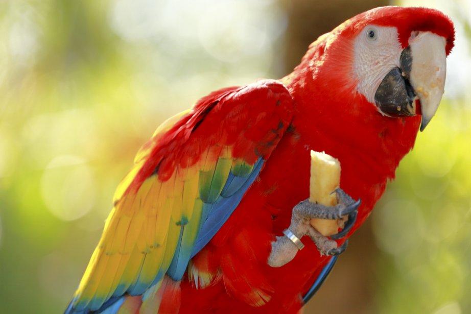 Güirá Oga abrite abrite une faune variée et exotique. (Photo Digital/Thinkstock)