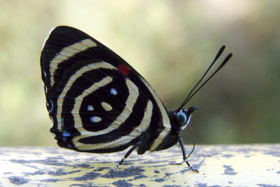 L'on profite des premières heures de la journée pour traverser les volières de papillons du parc brésilien. (Photo Digital/Thinkstock)