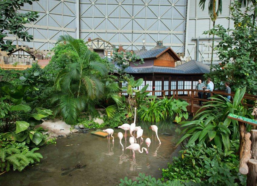 On y trouve une forêt tropicale de 66 000 plantes importées d'Asie des grands bassins aux eaux cristallines avec chutes d'eau, des reproductions de temples cambodgiens, des répliques d'habitations balinaises, polynésiennes ou thaïlandaises pour offrir au Brandebourg «le meilleur des tropiques», disent les dépliants du parc. (Photo PATRICK PLEUL, AFP)