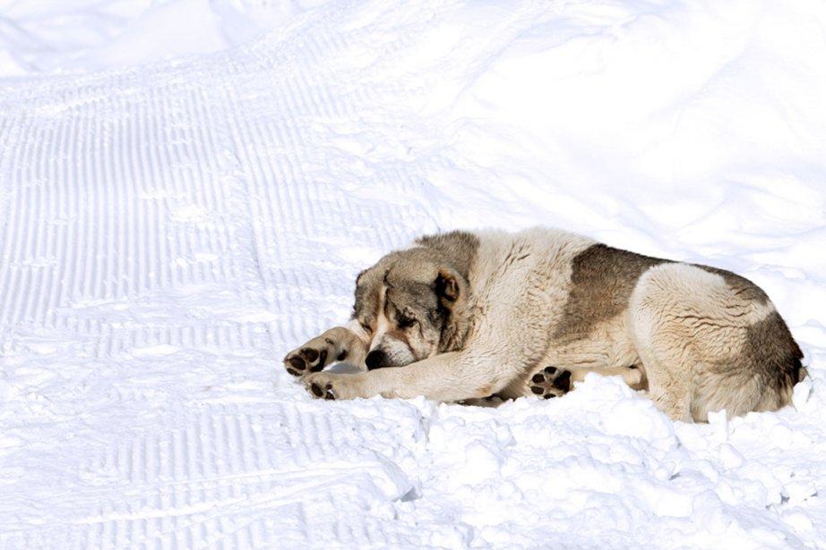 Tout comme leurs maîtres, les chiens peuvent souffrir... (Photo Masterfile)