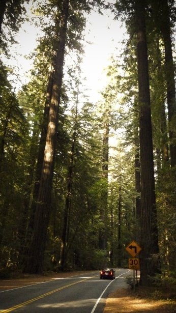 Sous les séquoias de l'Avenue des géants, en Californie. (Photo Simon Coutu, collaboration spéciale)
