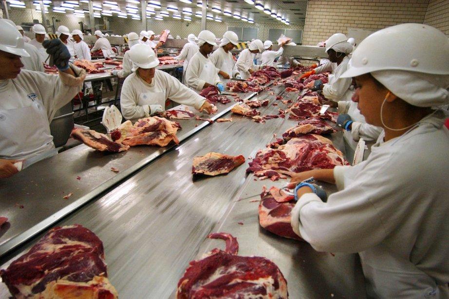 Selon leTimes, plus de 600000 animaux sont abattus... (PHOTO DARIO LOPEZ-MILLS, ARCHIVES AP)