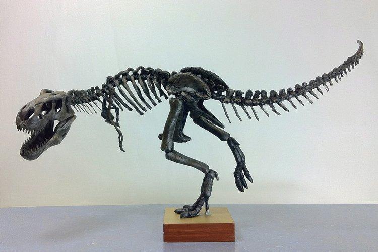 Le nom du nouveau dinosaureNanuqsaurus hoglundiprovient du mot... (Archives PC)