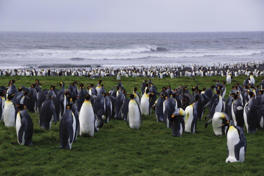 Sur les îles Kerguelen, dans les îles Australes françaises, dans le sud de l'océan Indien. (Photo fournie par Bruno Rodi)