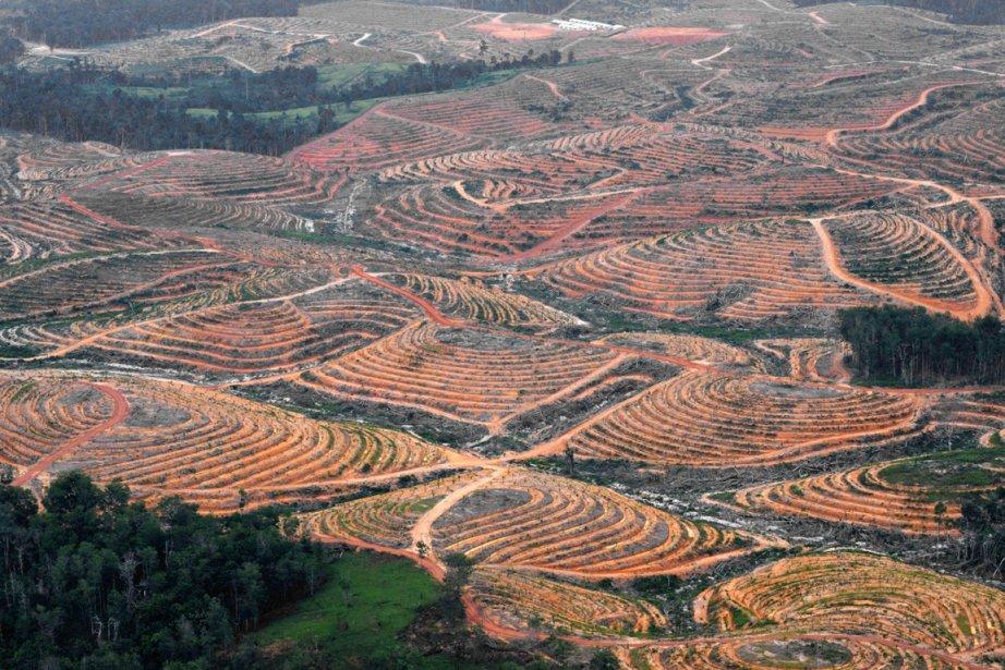 Une forêt de la région indonésienne de Bornéo... (PHOTO BAY ISMOYO, ARCHIVES AFP)