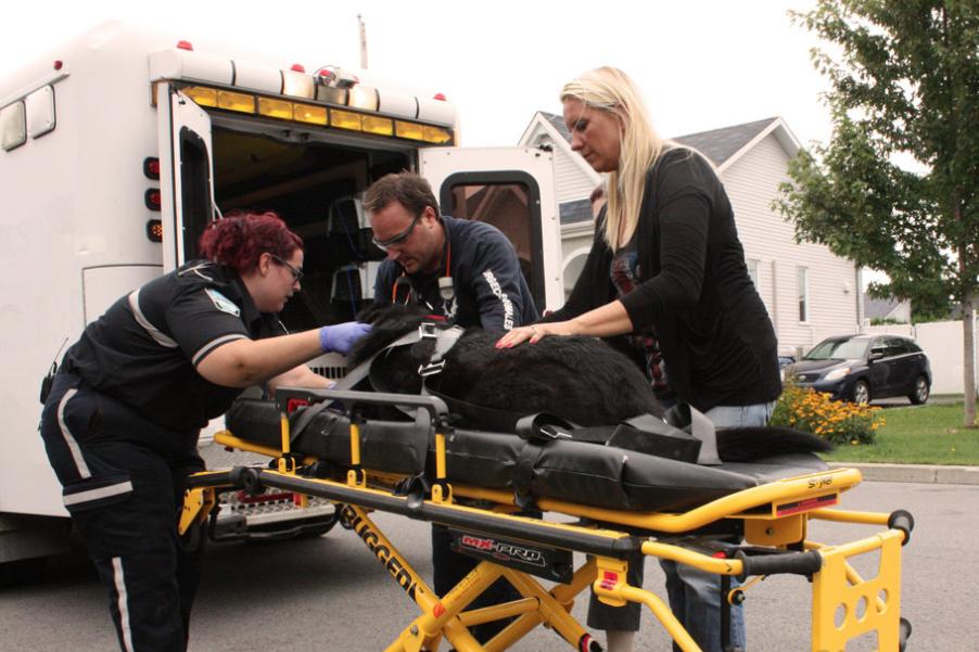 Urgences animales répond aux appels d'urgence dans quelque... (Photo fournie par Urgences animales)