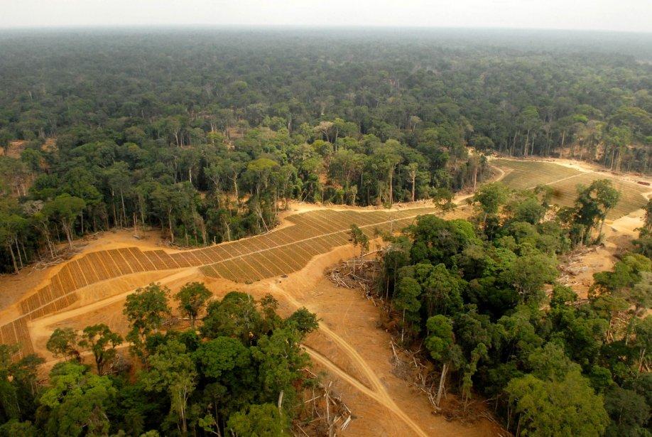 Des champs ont été transformés en plantations de... (Photo XAVIER BOURGOIS, Archives AFP)