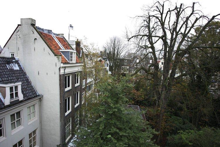 Le marronnier d'Anne Frank (qu'on voit ici en... (Archives AP)