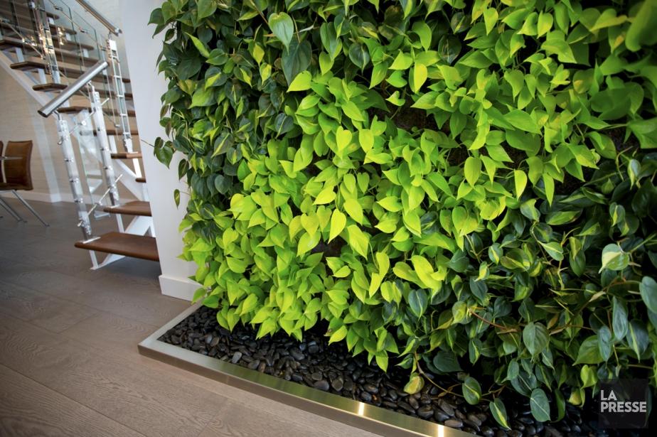 mur vegetal artificiel mur et tableau en vgtal stabilis ou artificiel haie cypres m x m. Black Bedroom Furniture Sets. Home Design Ideas