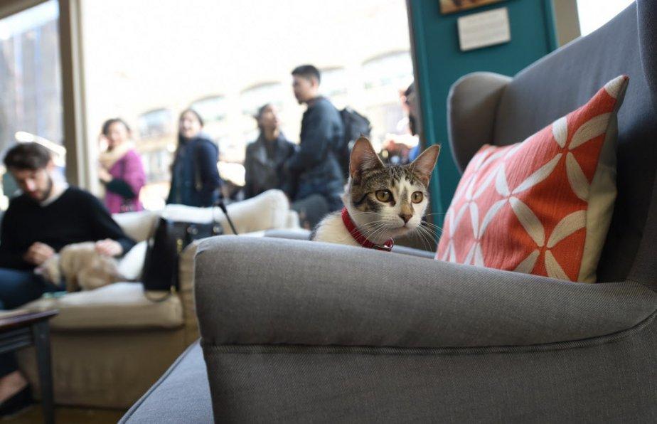 Parrainé par une société de nourriture pour animaux domestiques, ce «bar à chats», ou «café à chats», est ouvert jusqu'à dimanche. (Photo Emmanuel Dunand, AFP)
