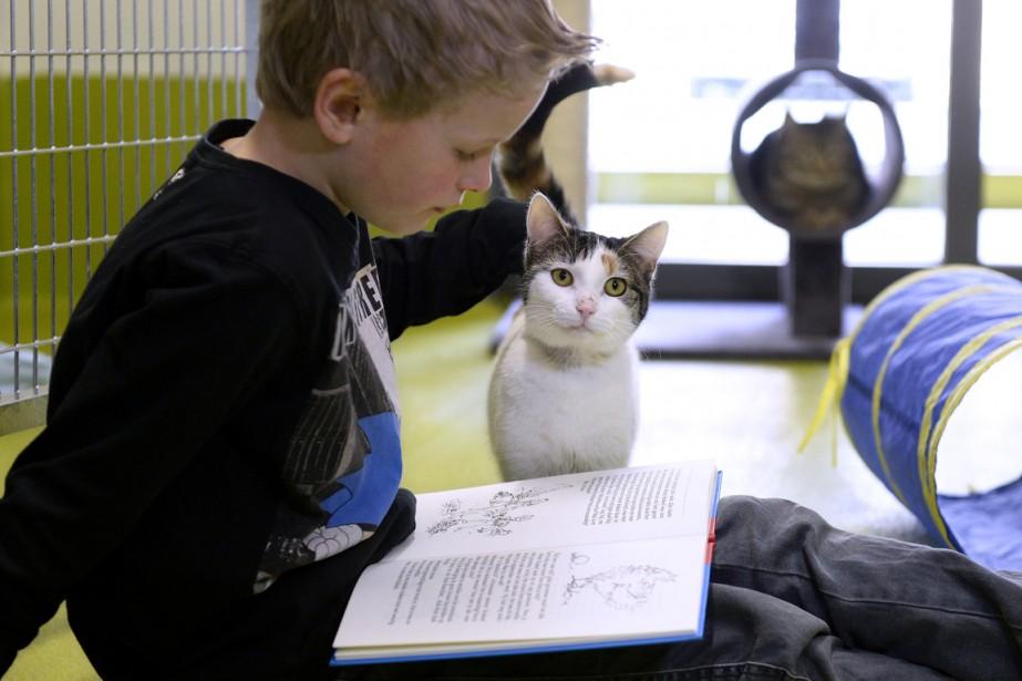Les chats sont des auditeurs calmes et, contrairement... (Photo archives AFP)