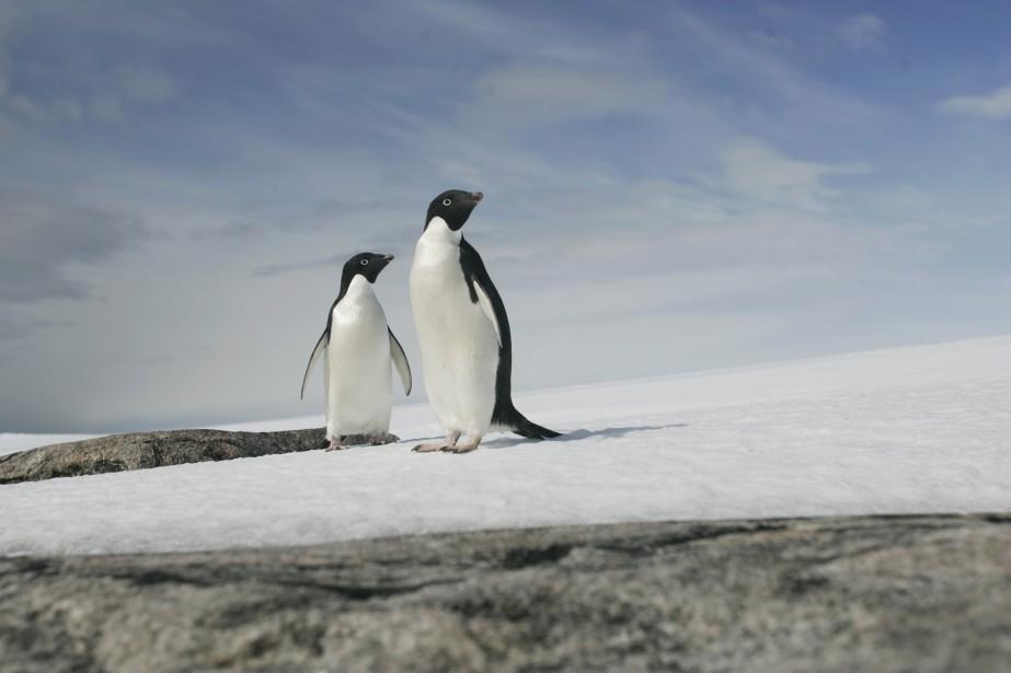 Le volume total de la masse de glace... (Photo REUTERS)