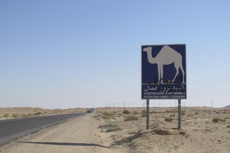 Les pancartes en bord de route indiquant la présence de dromadaires confirment que nous sommes aux portes du désert. (Photo Nathaëlle Morissette, La Presse)