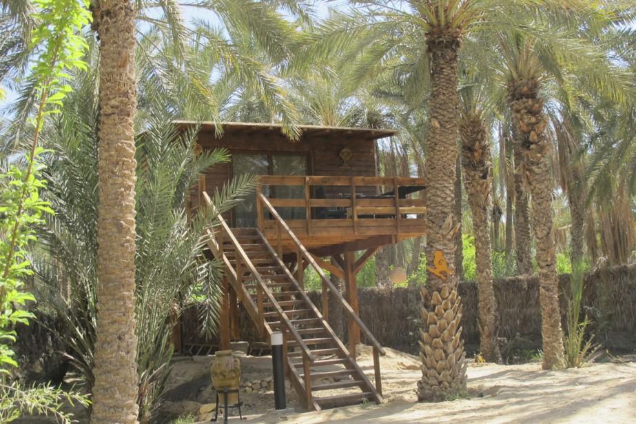 Dormir au beau milieu d'une oasis, dans un charmant petit bungalow perché dans les arbres, c'est ce qu'il est possible de faire sur le site de Diar Abou Habibi, à Tozeur. (Photo Nathaëlle Morissette, La Presse)