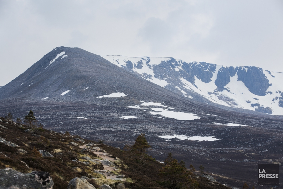«On dit que le lichen pousse dans les endroits où l'air est très pur», raconte...
