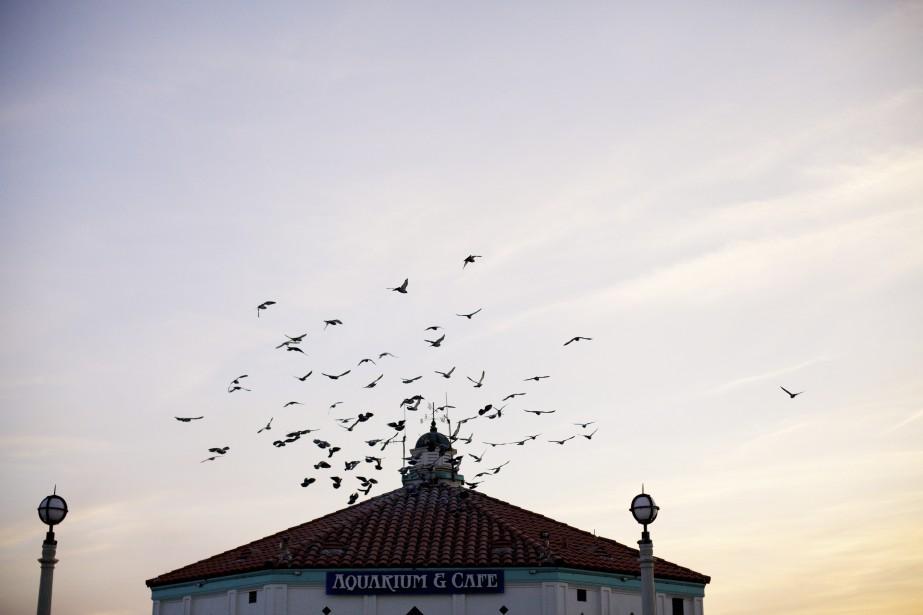 L'aquarium au bout du quai de Manhattan Beach (Photo Sarah Mongeau-Birkett, La Presse)