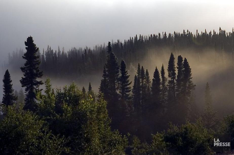 La scierie de Produits forestiers Résolu de Maniwaki... (Photo Ivanoh Demers, archives La Presse)