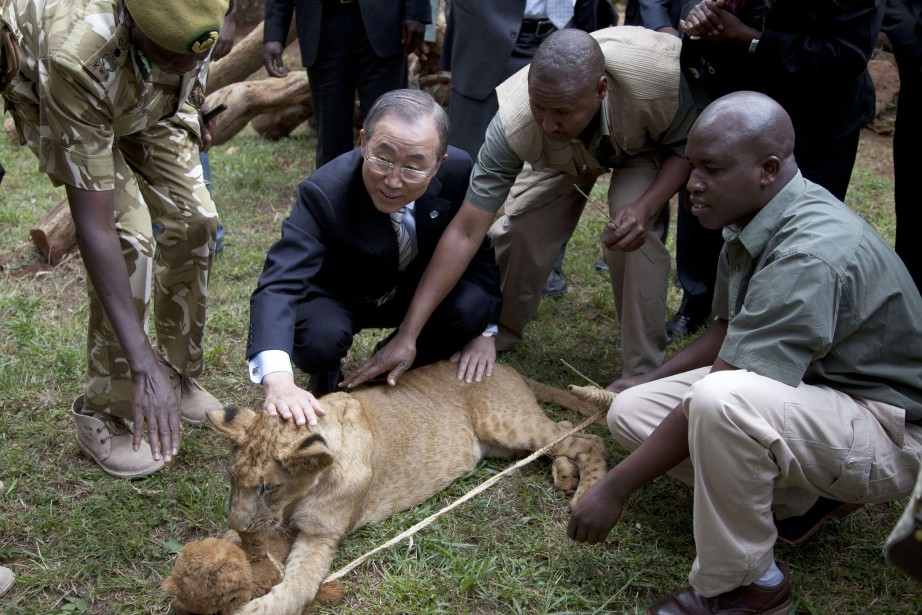 Ban Ki-moon a baptisé son lionceau Tumaini, ce... (PHOTO SAYYID AZIM, AFP)