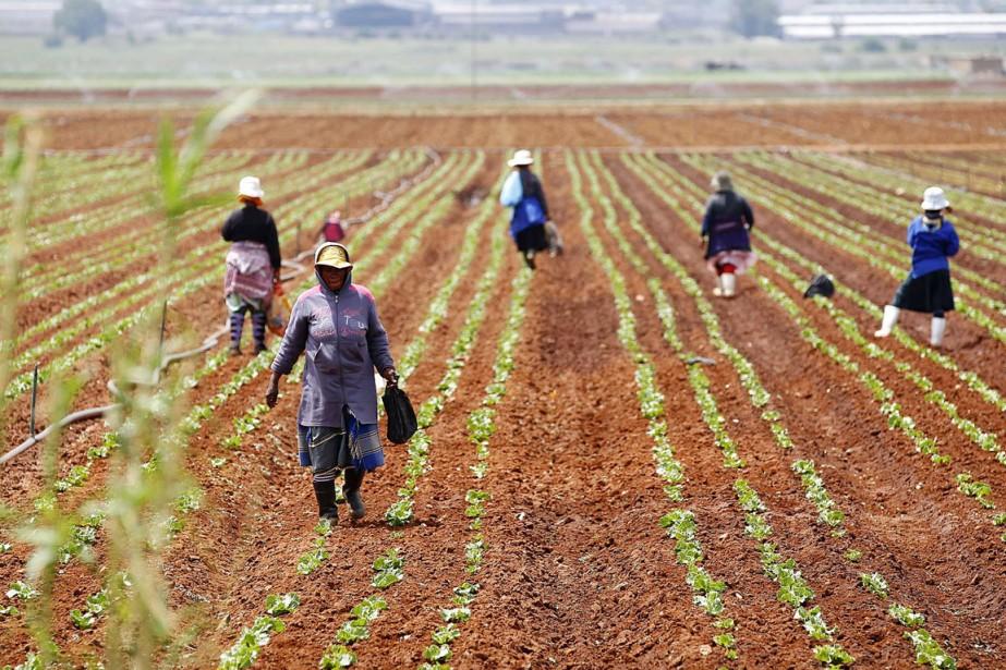 """Résultat de recherche d'images pour """"afrique du sud, terres, agriculture, réformes agraires, afrique du sud"""""""