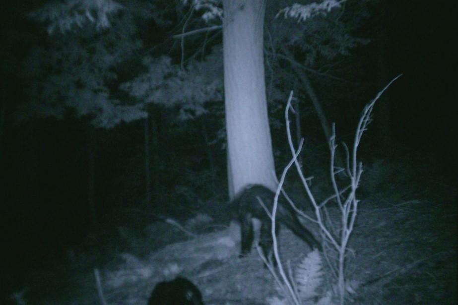 En 2007, un chasseur de la Pennsylvanie a... (Photo archives Associated Press)