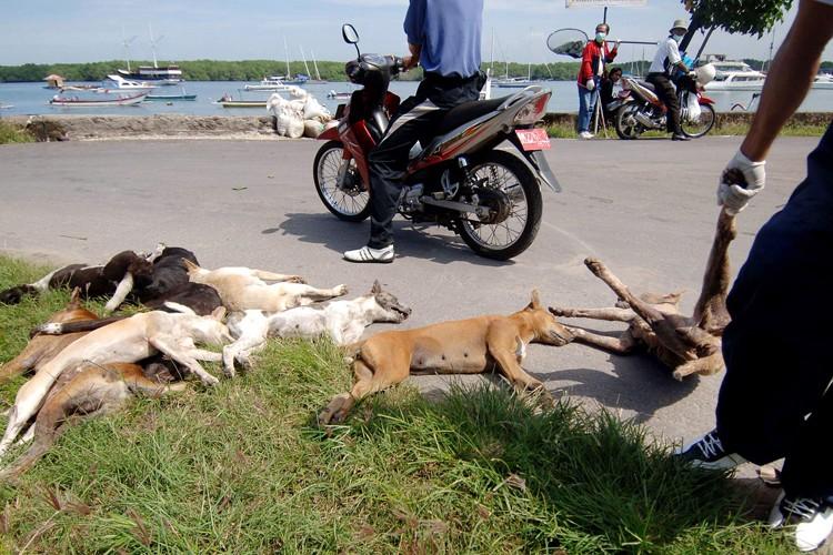 L'association de défense des droits des animaux PETA... (Photo: AFP)