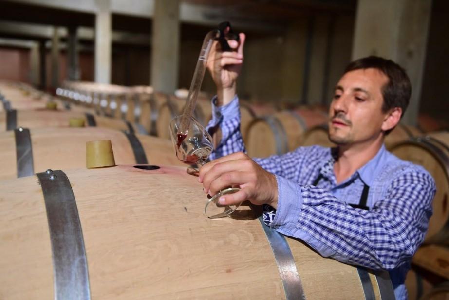 Selon le responsable de Vinovalie, beaucoup de viticulteurs... (Photo ERIC CABANIS, AFP)