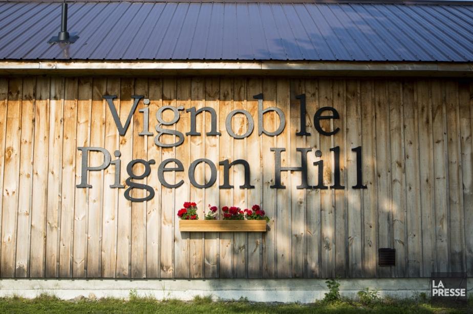 Le vignoble de Pigeon Hill passe presque... (Photo Simon Giroux, La Presse)