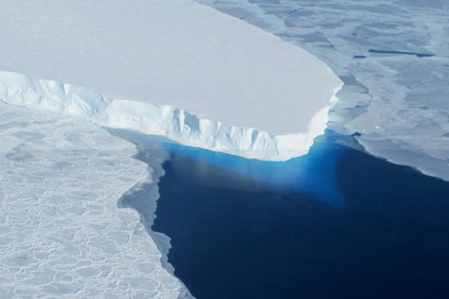 La mouche de l'Antarctique, seul insecte... (PHOTO ARCHIVES AGENCE FRANCE-PRESSE)
