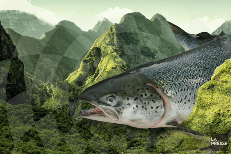 Une grosse truite coincée entre les montagnes? On... (Photomontage Catherine Beaupré, La Presse)