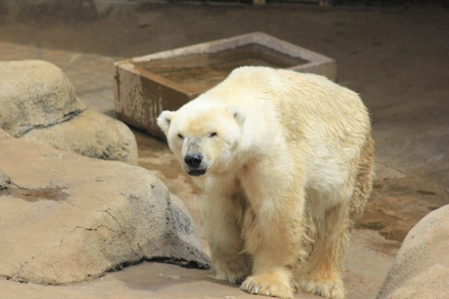 L'animal âgé de 30 ans n'a survécu que... (PHOTO ARCHIVES ASSOCIATED PRESS)