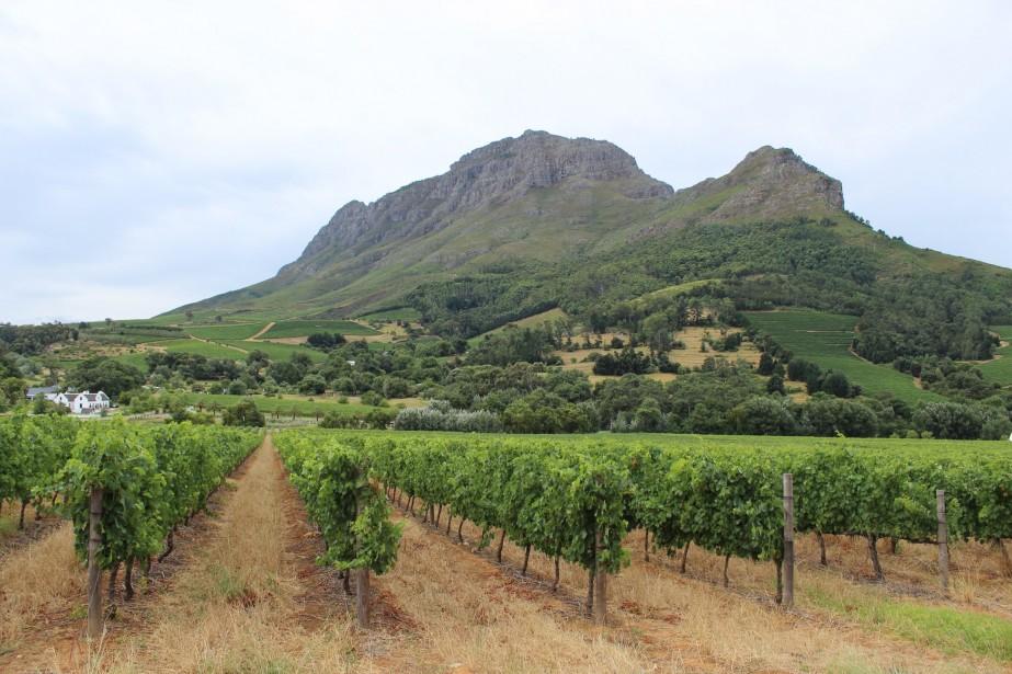 Stellenbosch, le centre névralgique de l'Afrique du Sud vinicole. (Photo Sylvie St-Jacques, La Presse)