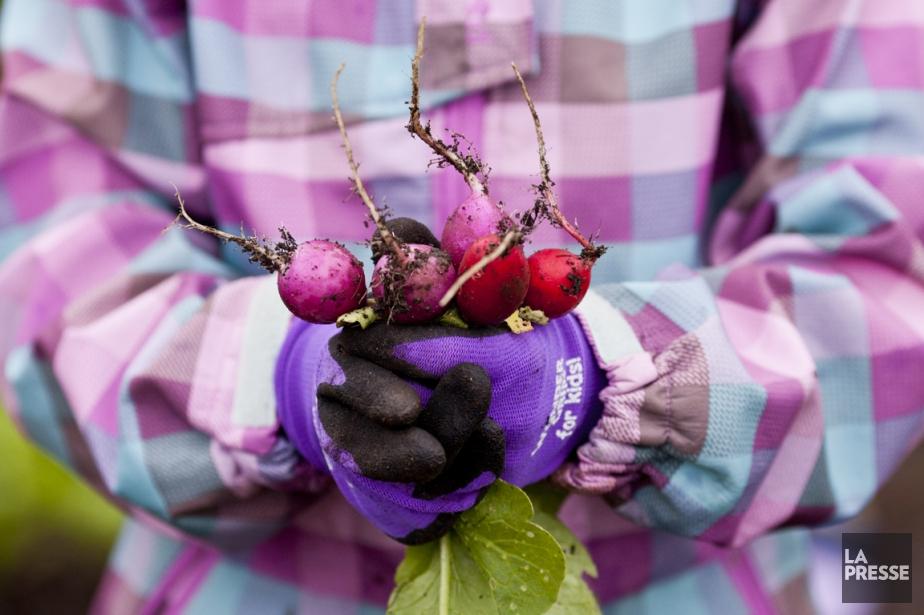 Un coin reculé du Jardin botanique accueille depuis... (Photo Sarah Mongeau-Birkett, La Presse)