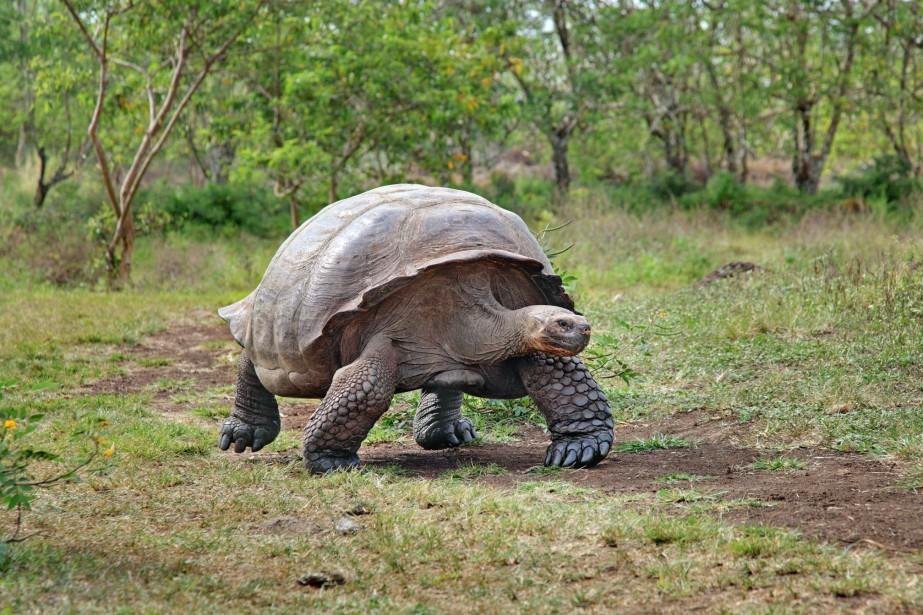 Les îles Galapagos hébergent onze espèces différentes de... (Photo Digital/Thinkstock)