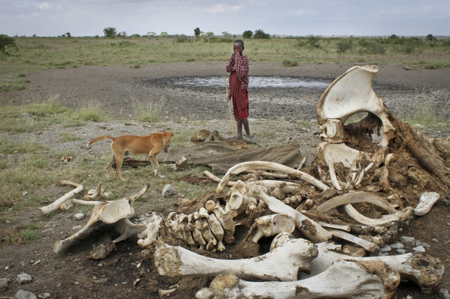 Un jeune Massaï et son chien observent les... (PHOTO JASON STRAZIUSO, ARCHIVES AP)