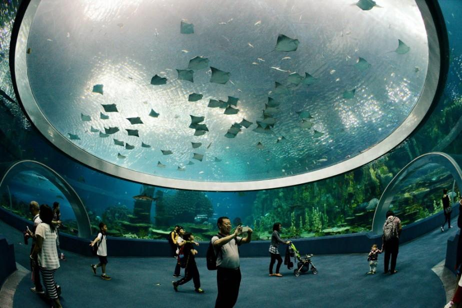 Chimelong Ocean Kingdom, qui a ouvert en mars,... (Photo Mark RALSTON, AFP)