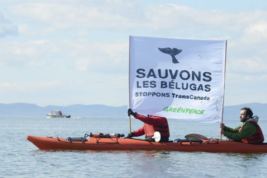 Des activistes de Greenpeace ont manifesté à Cacouna... (PHOTO NICOLAS FALCIMAIGNE, ARCHIVES LA PRESSE CANADIENNE)