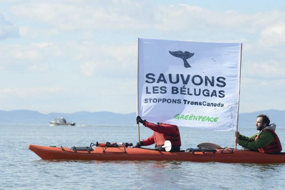 Des activistes de Greenpeace ont manifesté à Cacouna... (PHOTO NICOLAS FALCIMAIGNE, ARCHIVES LA PRESSE CANADIENNE)