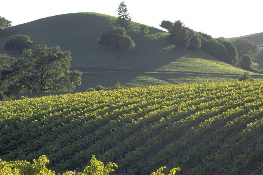 Sonoma est au coeur d'une région viticole très... (Photo fournie par le Bureau touristique du comté de Sonoma)