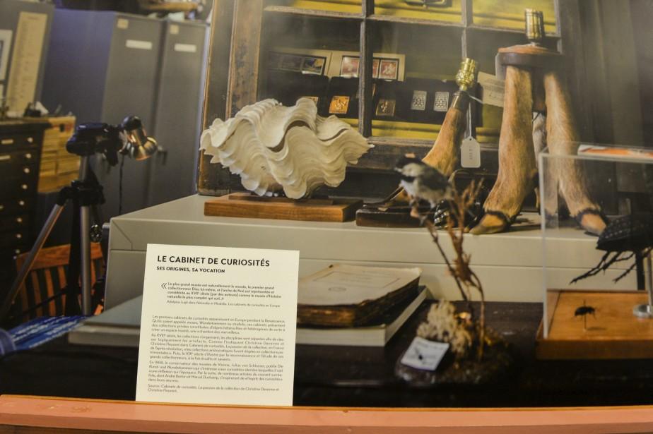 L'Université a bâti au fil du temps une impressionnante réserve d'artefacts, principalement dans le domaine de l'histoire naturelle. (Le Soleil, Pascal Ratthé)