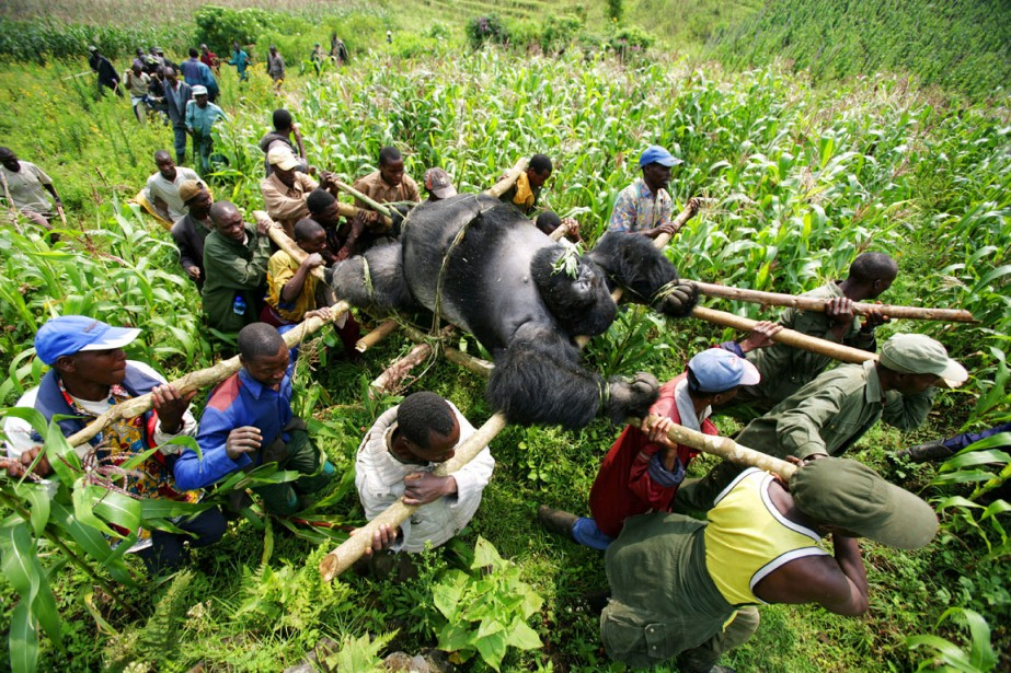 De 2005 à 2011, le Programme des Nations... (PHOTO BRENT STIRTON, ARCHIVES GETTY IMAGE)