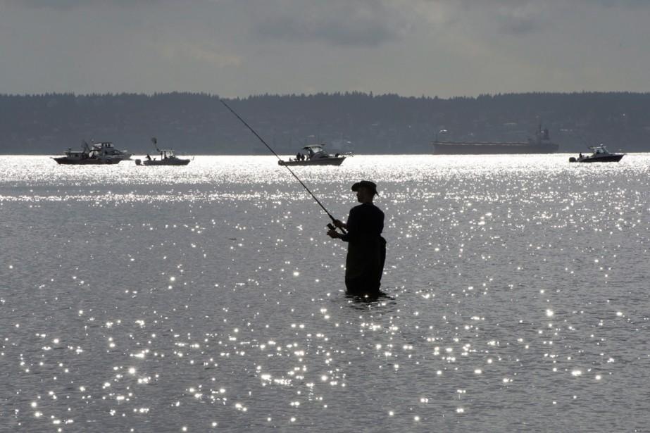 Les poissons migrent à une vitesse de 15... (PHOTO JONATHAN HAYWARD, ARCHIVES PC)