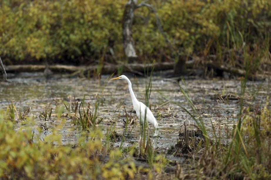 En se baladant dans l'île, on peut observer aussi bien la faune que la flore. (Photo Martin Chamberland, La Presse)