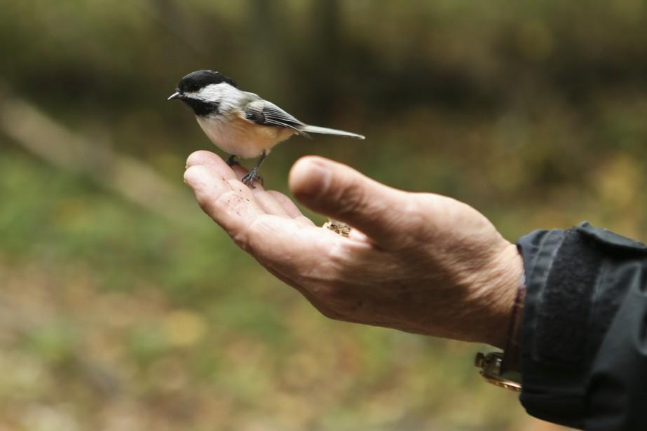 Il y a 226 espèces d'oiseaux dans l'île. Il est par ailleurs facile d'en nourrir dans le creux des ses mains. (Photo Martin Chamberland, La Presse)