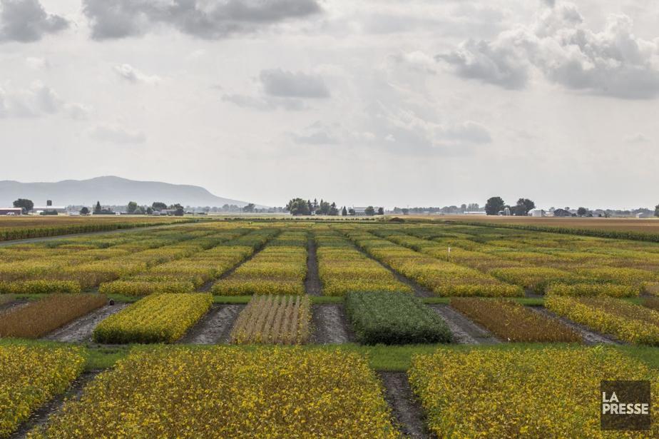 Les fermiers ont dû abandonner complètement certaines productions,... (PHOTO OLIVIER PONTBRIAND, ARCHIVES LA PRESSE)