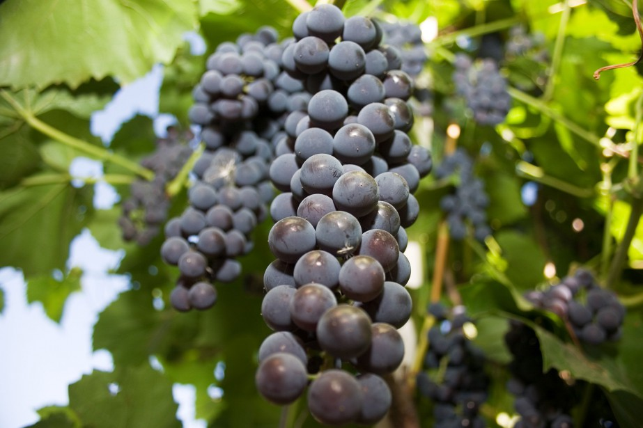 Le Vinsanto est un vin doux, sirupeux, une... (Photo Digital/Thinkstock)