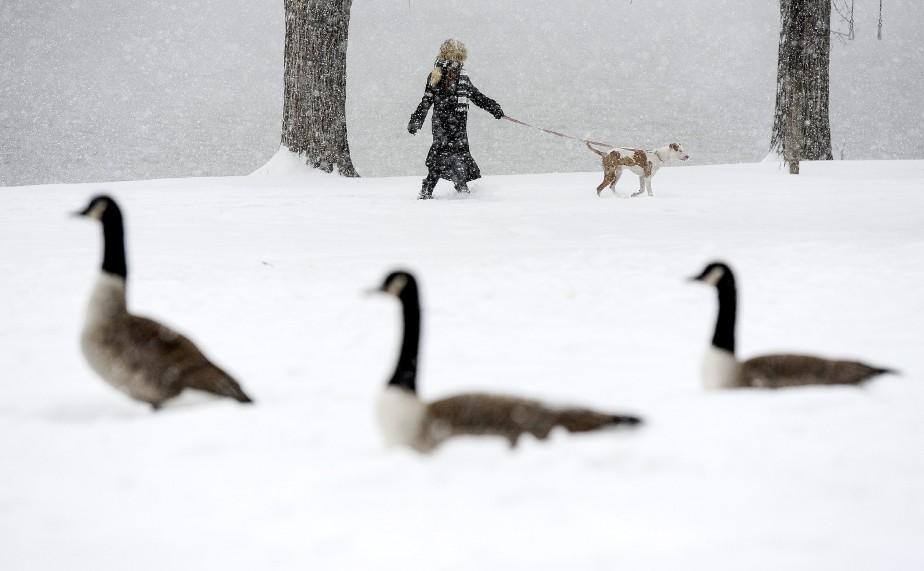 «Nous avons quitté le Nord pour ça» semblent se dire ces bernaches du Canada au Colorado. (Associated Press)