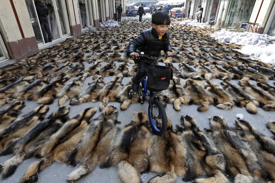 Un jeune Chinois circule à vélo sur le... (Photo William Hong, Reuters)